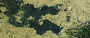 """photogramme extrait du film de Claude Schmitz diffusé dans """"Darius, Stan et Gabriel contre le monde méchant"""""""